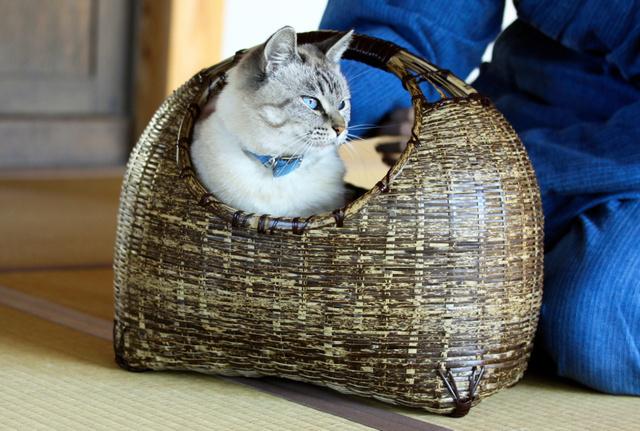"""高价难挡人气 日本""""猫咪家具""""热销国内外"""