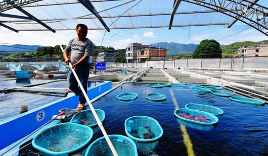 福州閩侯:小金魚 大產業