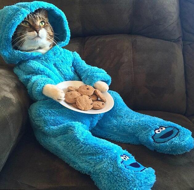 美大使馆群发电邮 邀众人参加猫咪睡衣派对