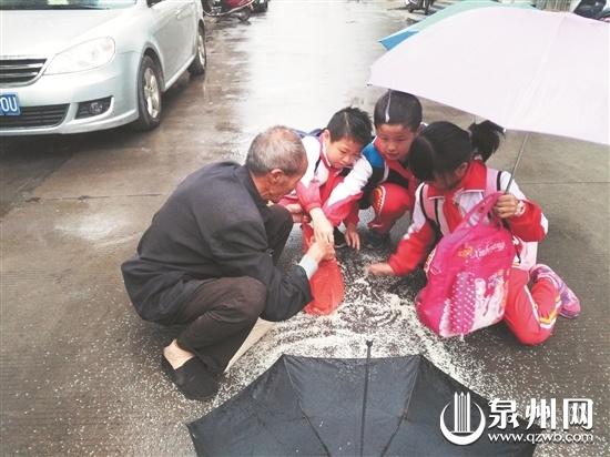 寒雨中的暖心一幕 德化小学生放学途中帮老人捡米