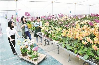 农博会·花博会推动了两岸企业发展 十年又十年携手挣大钱