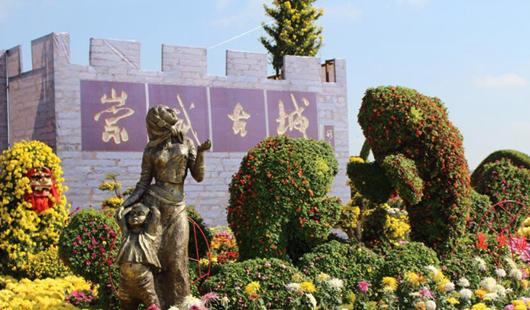 第六届威彩国际省菊花展览(泉州展区)冷艳表态