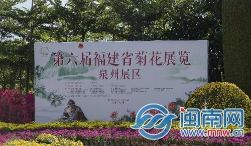 """明起 到泉州市区滨海公园赏最美""""菊花海"""""""