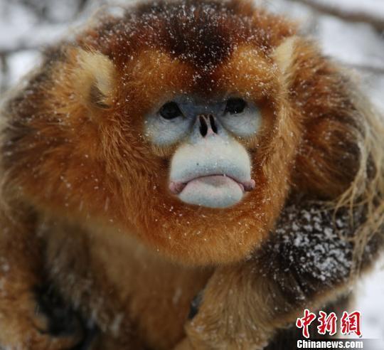 """神农架国家公园设23处野生动物""""生命通道""""_社会新闻"""