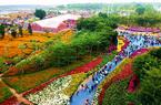福建泉州:万菊争艳 游人如织