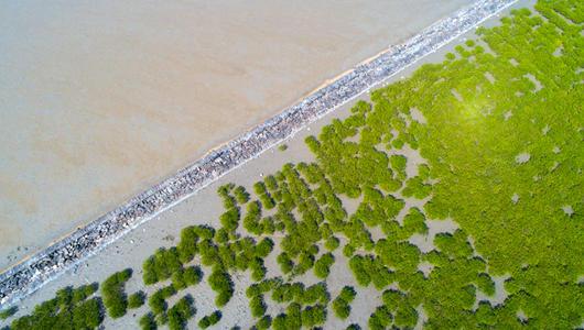 福建莆田:湄洲岛西亭澳上的红树林