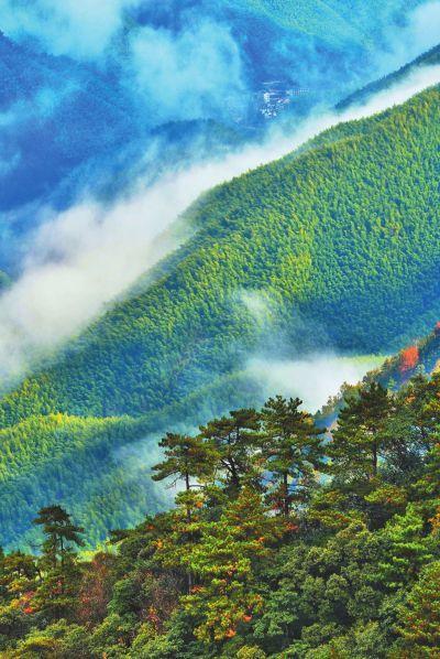 福建武夷山生物多样性研究有声有色