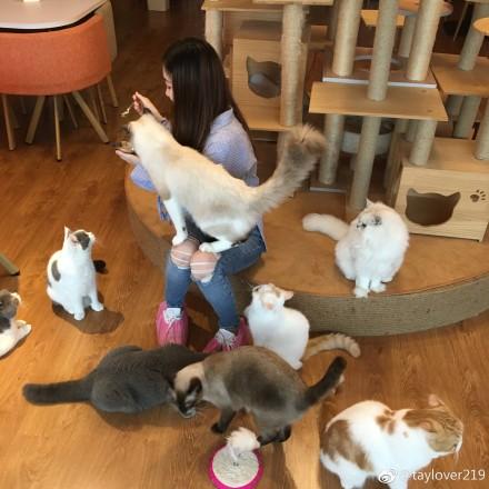 怕客人压力太大把猫撸秃是什么梗?哪些姿势撸猫能让猫舒服