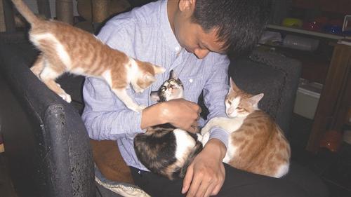 怎么判断母猫生完了图片