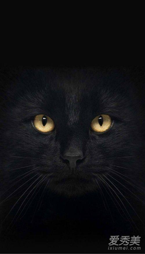 抖音黑猫睁眼高清壁纸 抖音黑猫睁眼动态壁纸在哪下载