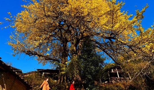 福建武夷山:初冬时节 层林尽染