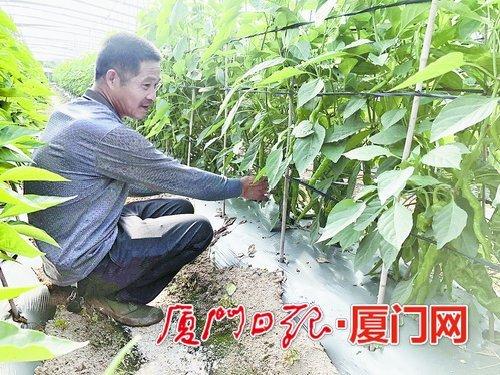 """廈農贊""""測土配方施肥"""":施肥少多了 果蔬產量倍增"""