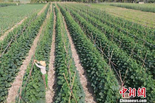 海南农垦:3年改革激发活力 66年老国企获新生