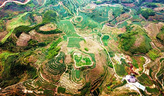 福建泉州:新型农业经营主体渐成乡村振兴主力军