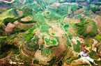 福建泉州:新型農業經營主體漸成鄉村振興主力軍