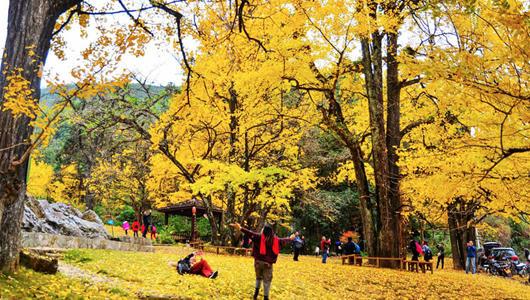 福建三明:銀杏樹下,萬宅村的流年時光