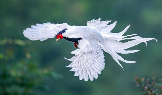 华夏生态美景:鸟瞰山水 尽享自然