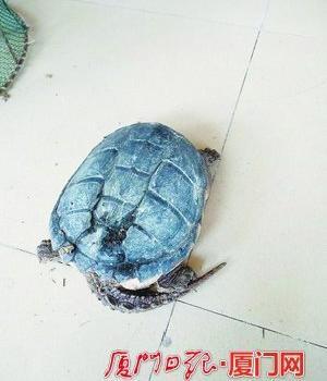 山间偶遇大乌龟 热心市民当保镖一路护送400多米