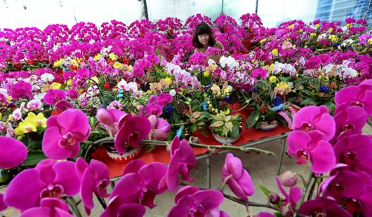 威彩国际威彩平台:花开飘香迎新春