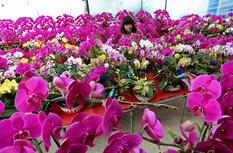 福建福州:花开飘香迎新春