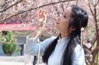 天气晴好 恰逢林阳禅寺赏梅好时节