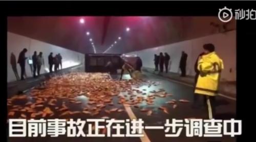 高速隧道万条锦鲤怎么回事?高速隧道万条锦鲤背后原因大揭秘