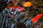 武夷山九龙窠景区:冬日游玩 满目翠绿