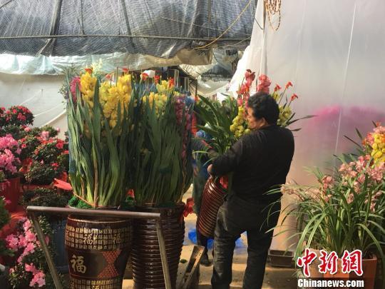 """春节添彩 福州花卉市场现""""买花潮"""""""