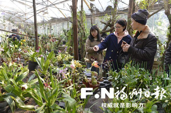 于山春季兰花展2月5日开展 百余种兰花正月斗艳