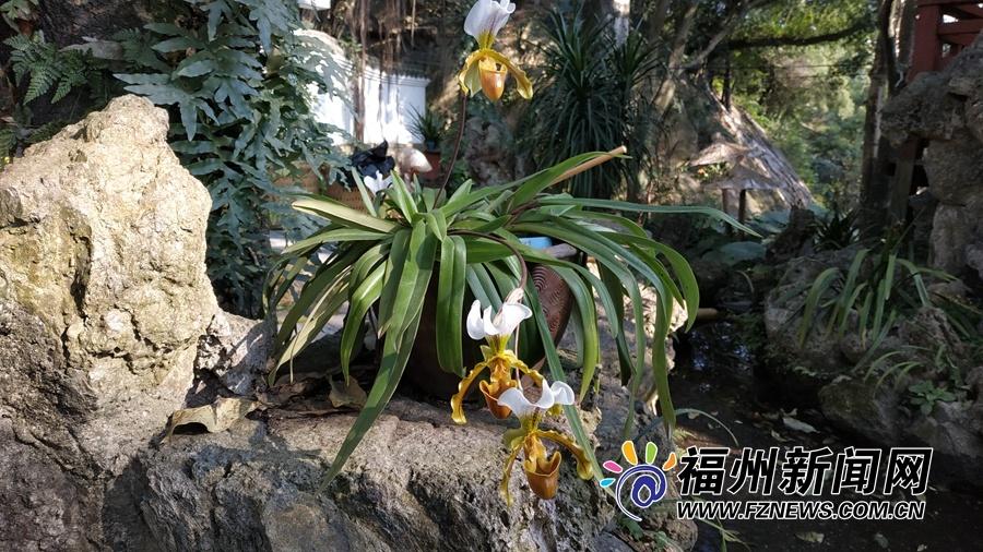 于山春季兰花展正月初一至十五开展