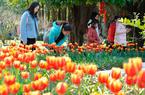 西湖左海景区迎春花展:16万株郁金香妆点草坪