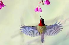 福建最美冬日花鸟图正在上演 春节假期快去看