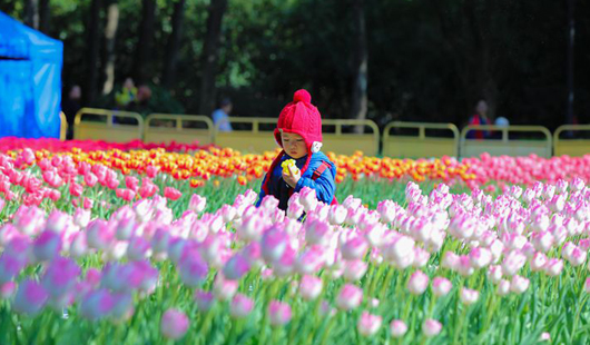 郁金香开迎新年 温泉公园满春色