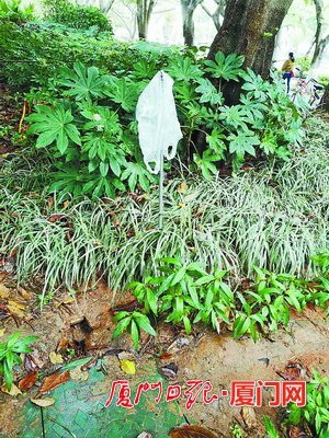 厦门嘉禾路疑因灌溉水龙头被破坏致污水流一地 有关部门已处理完毕
