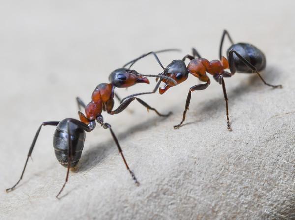 科学家:全球昆虫数目减少,100年内或大灭绝会致灾难性后果