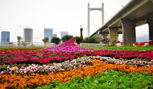 福建福州:花海公园成网红打卡地