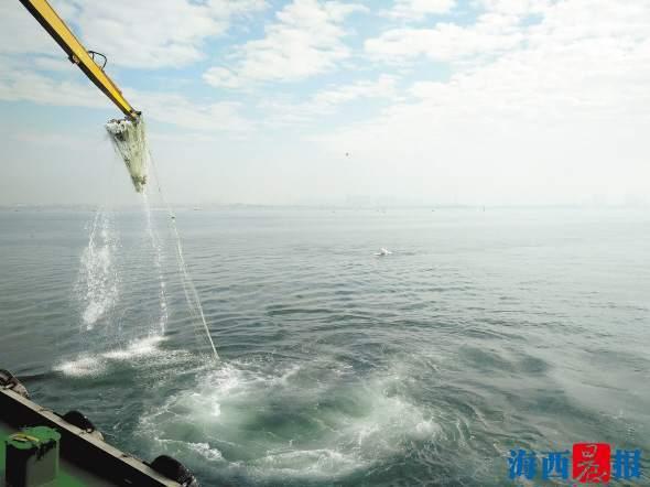 海上偶遇4只白海豚 执法船减速行驶获游客点赞