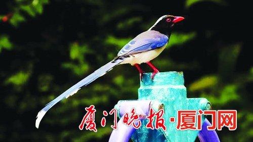 """金沙国际娱乐场欢迎您的天空飞着""""城市三宝"""" 喜欢和人亲近的鸟儿挺多的"""