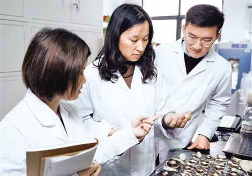 """探访真菌学国家重点实验室:众里寻""""菌""""千百度"""