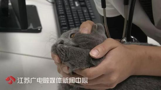 万元给猫割双眼皮有图有真相,万元给猫割双眼皮原因曝光网友炸锅了