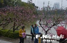 福州?#19968;?#30427;开迎春来 近期可到西湖公园与乌山观赏