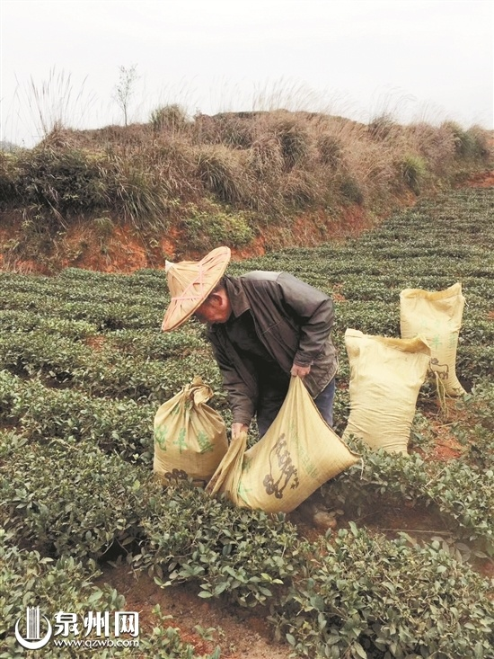 """泉州茶叶出口实现""""开门红"""" 价格再度攀升"""