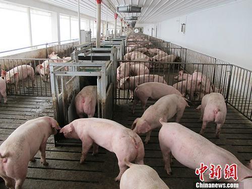 19部分推进非洲猪瘟防控:严肃打击遮盖疫情等举动