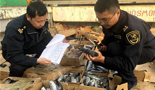 厦门海关快速验放单批量最大远洋自捕冻鱼产品