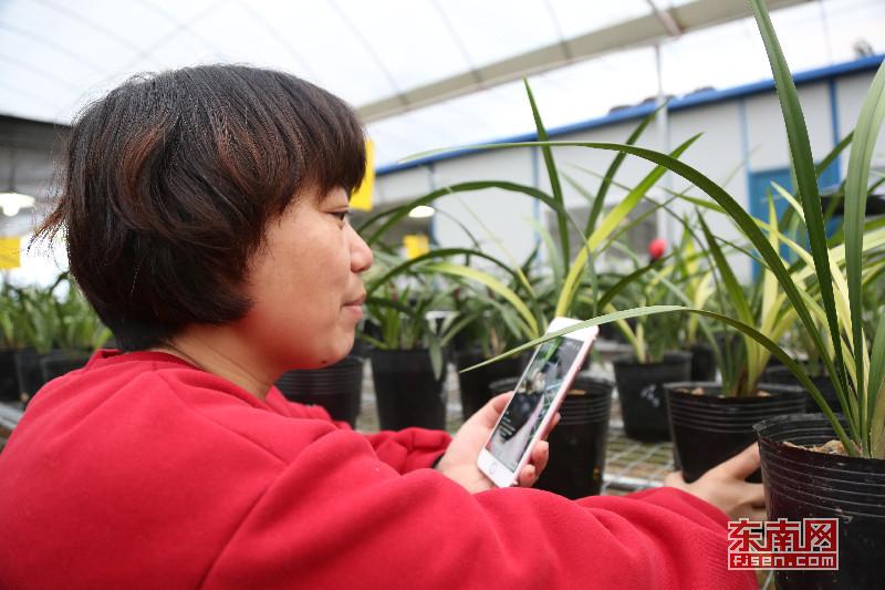 漳州南靖兰花:从野生资源到高优农业产业的蜕变