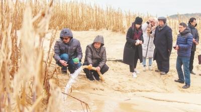 风口处成功越冬 百余亩菌草扎根岚岛