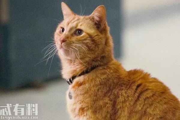 惊奇队长的猫叫什么真实身份介绍 噬元兽大结局是什么