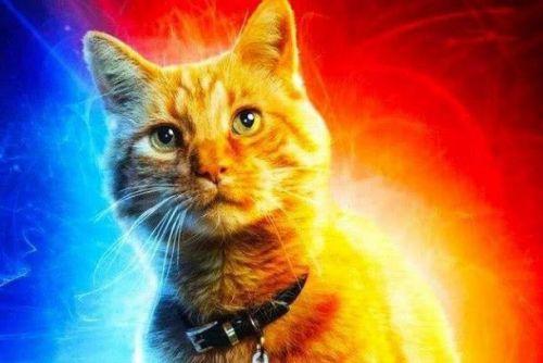 惊奇队长橘猫为什么是噬元兽?惊奇队长的猫有什么超能力?