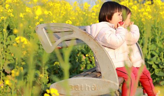 福州花海公园油菜花:春风十里 花漪荡漾
