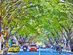 台江推进绿化花化彩化 出门就能看到身边的美